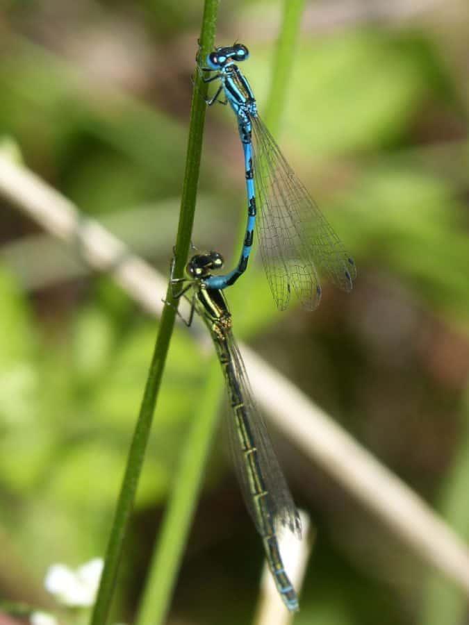 animal, macro, dragonfly, nature, insect, wildlife, arthropod, invertebrate
