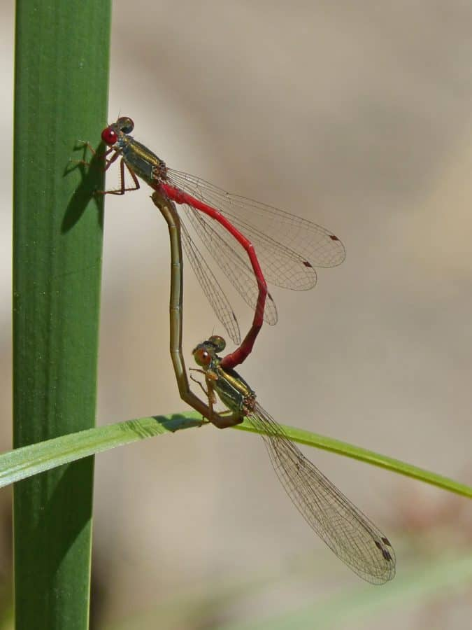 green leaf, dragonfly, wildlife, invertebrate, animal, insect, nature
