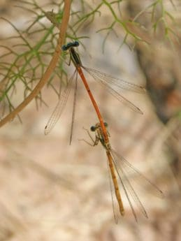 dragonfly, wildlife, insect, nature, arthropod, invertebrate