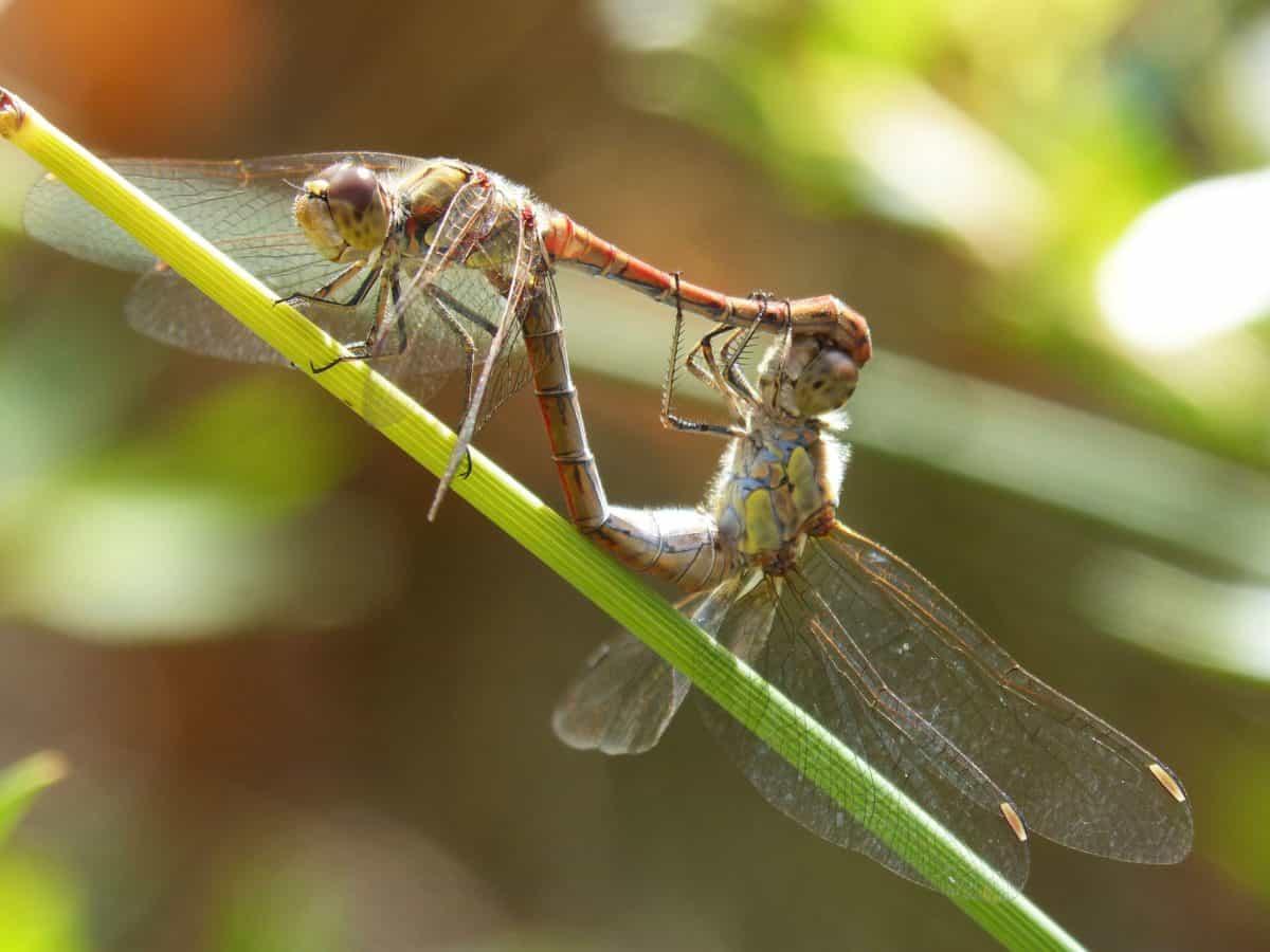 animal, nature, wildlife, dragonfly, insect, arthropod, invertebrate