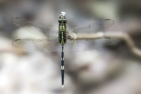animal, macro, nature, dragonfly, insect, arthropod, invertebrate