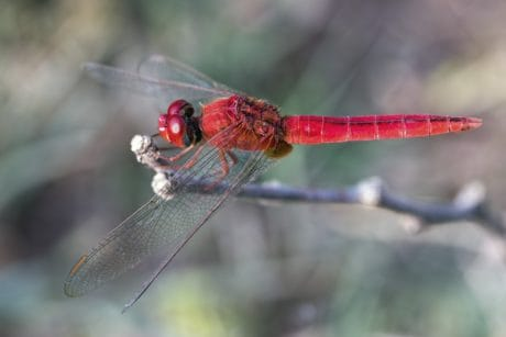 animal, nature, dragonfly, wildlife, insect, arthropod, invertebrate
