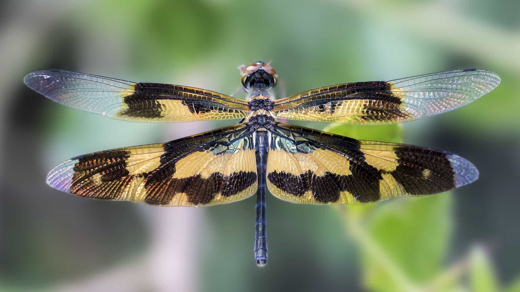 Free Picture Dragonfly Macro Wing Invertebrate
