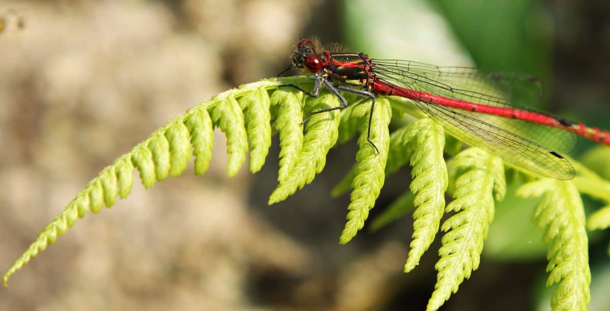 leaf, nature, flora, insect, dragonfly, arthropod, invertebrate