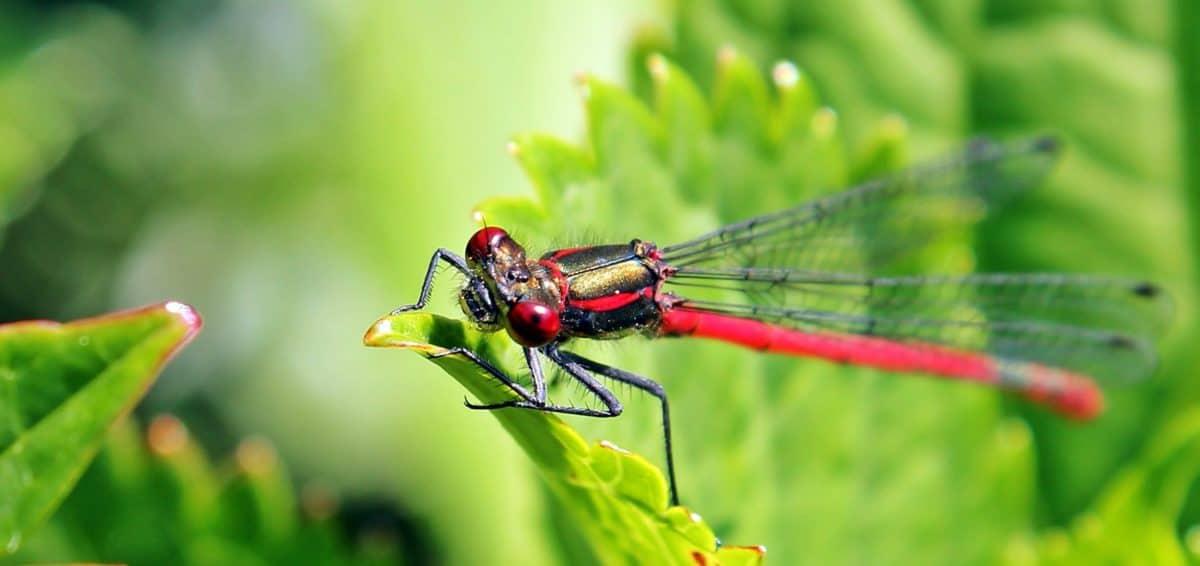 nature, dragonfly, macro, animal, leaf, insect, wildlife, arthropod, invertebrate