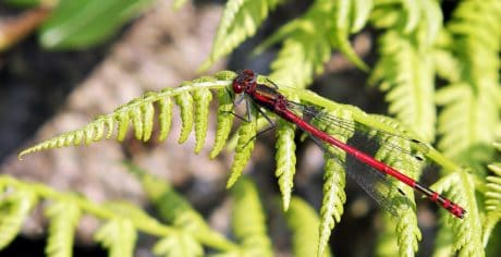 nature, garden, flora, insect, leaf, dragonfly, arthropod