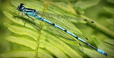 insect, wildlife, nature, dragonfly, animal, invertebrate