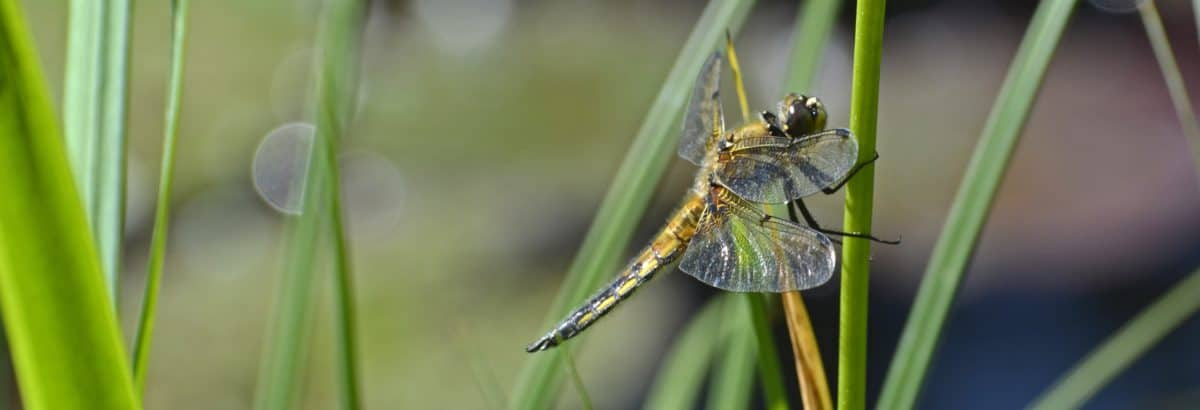 macro, animal, dragonfly, nature, flora, wildlife, insect, arthropod, invertebrate
