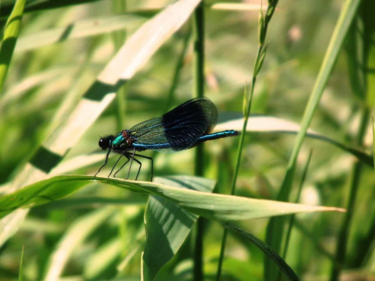 insect, nature, grass, summer, invertebrate, animal