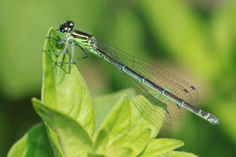 wildlife, insect, nature, leaf, dragonfly, arthropod, invertebrate