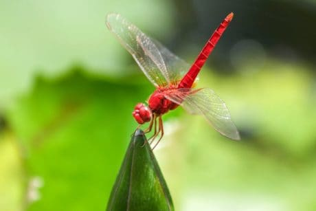 nature, dragonfly, insect, wildlife, arthropod, bug, invertebrate