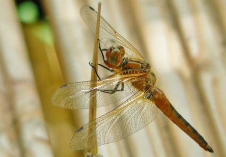 nature, insect, wildlife, dragonfly, animal, arthropod, invertebrate