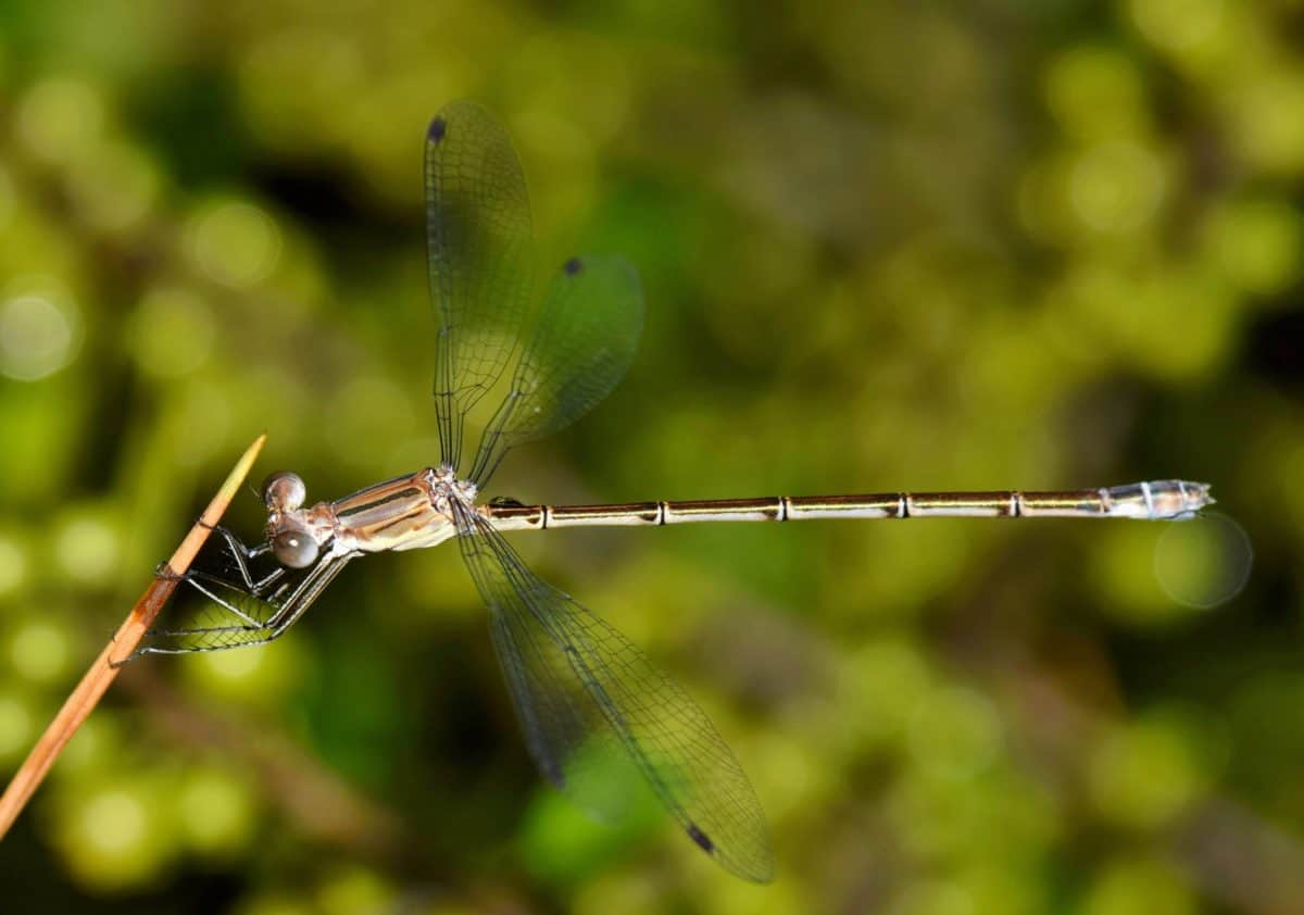 nature, dragonfly, insect, arthropod, invertebrate, plant