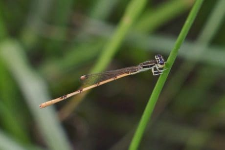 dragonfly, insect, nature, leaf, arthropod, grass, invertebrate