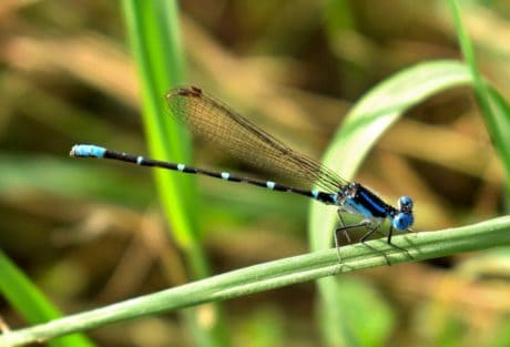 Libellula, natura, animale, foglia, fauna selvatica, insetto, estate