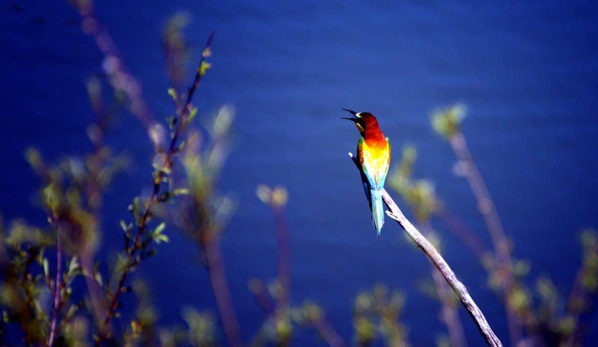 nature, tropic bird, wildlife, beak, animal, feather, wild, tree