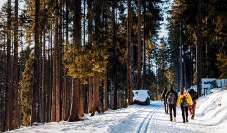 neige, gens, conifère, froide, bois, pin, paysage, arbre, hiver