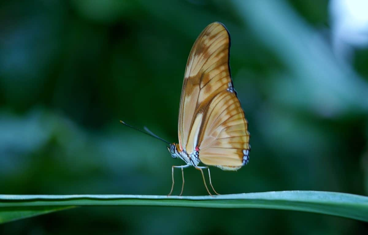 invertebrate, animal, insect, wildlife, nature, butterfly, summer