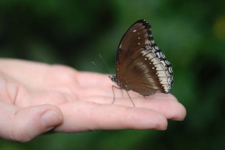 invertebrate, wildlife, insect, nature, hand, finger, butterfly, flower