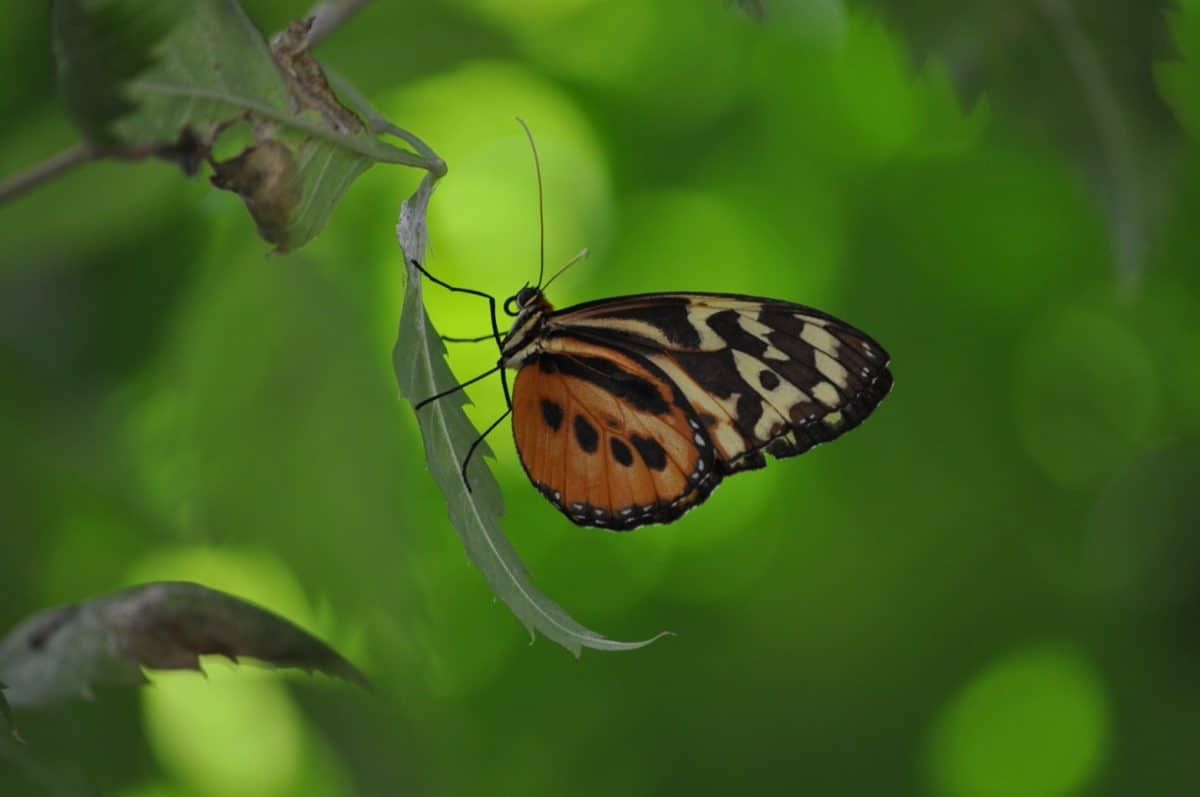 nature, wings, insect, butterfly, arthropod, ladybug, macro, bug