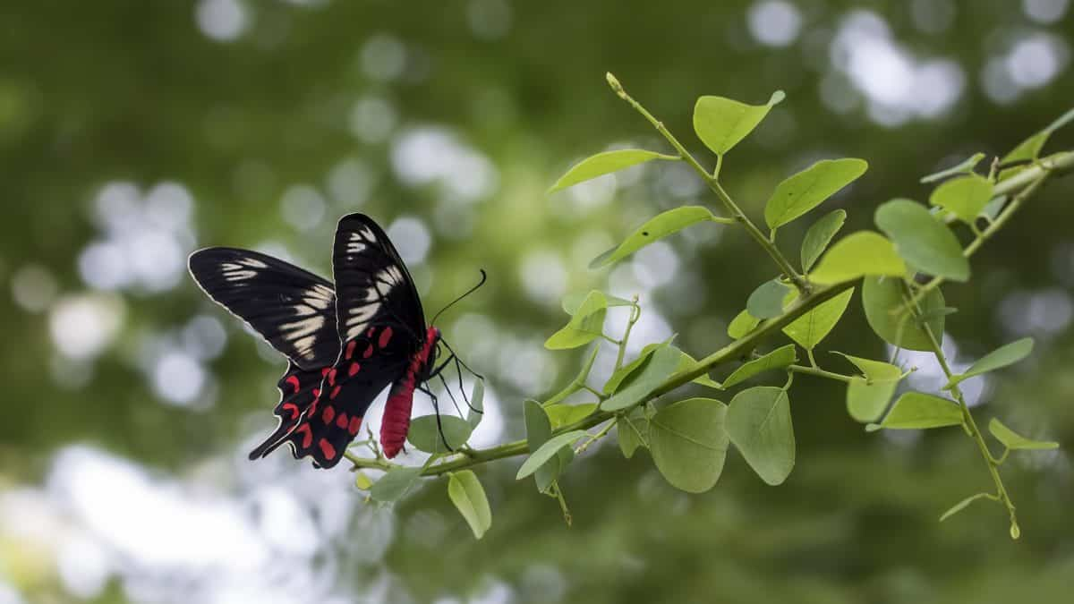 insect, nature, flower, flora, summer, butterfly, leaf, tree