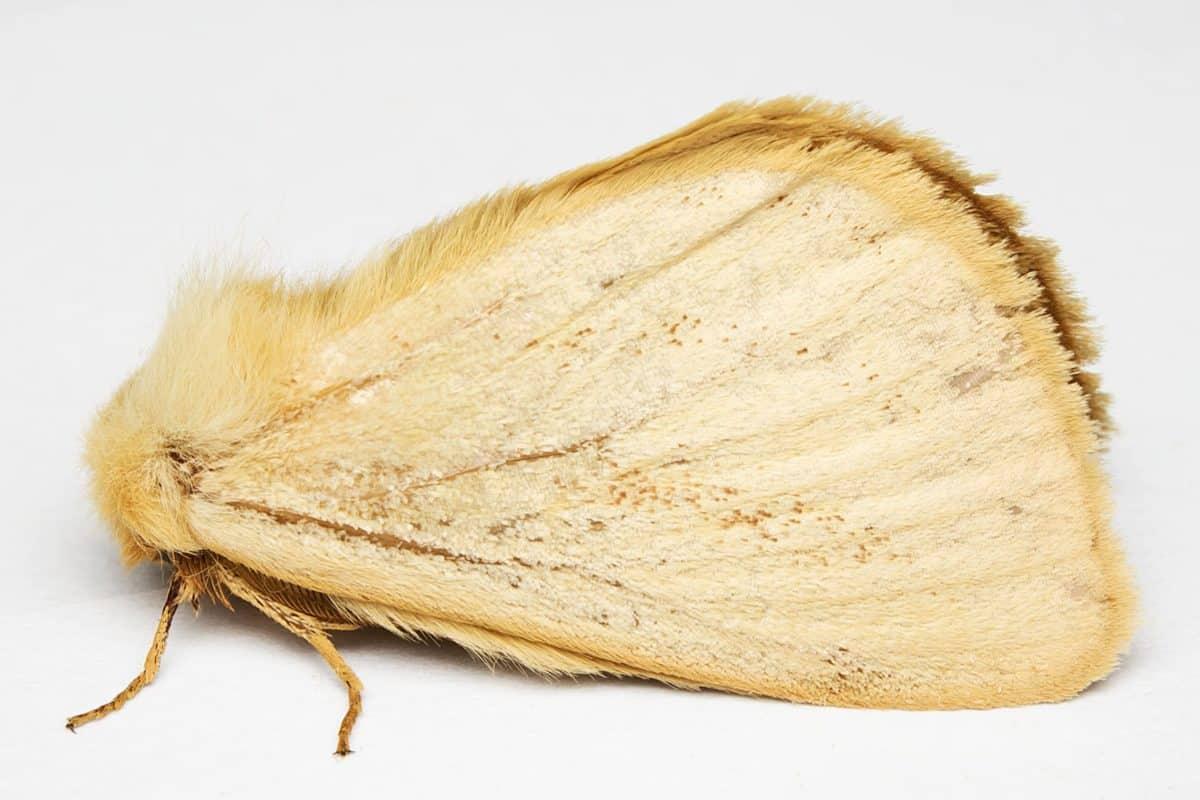 nature, moth, macro, brown, butterfly, food, brown