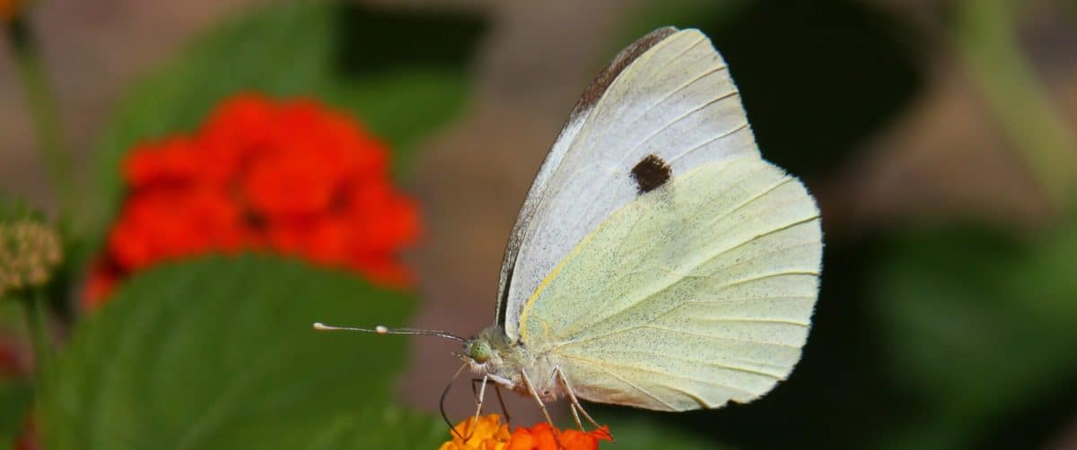 invertebrate, flower, nature, butterfly, insect, colorful