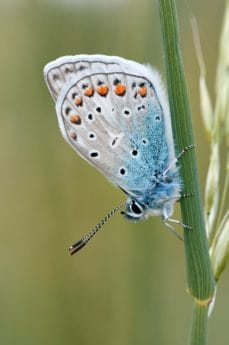 wildlife, summer, macro, colorful, wings, butterfly, nature, insect, blue, plant