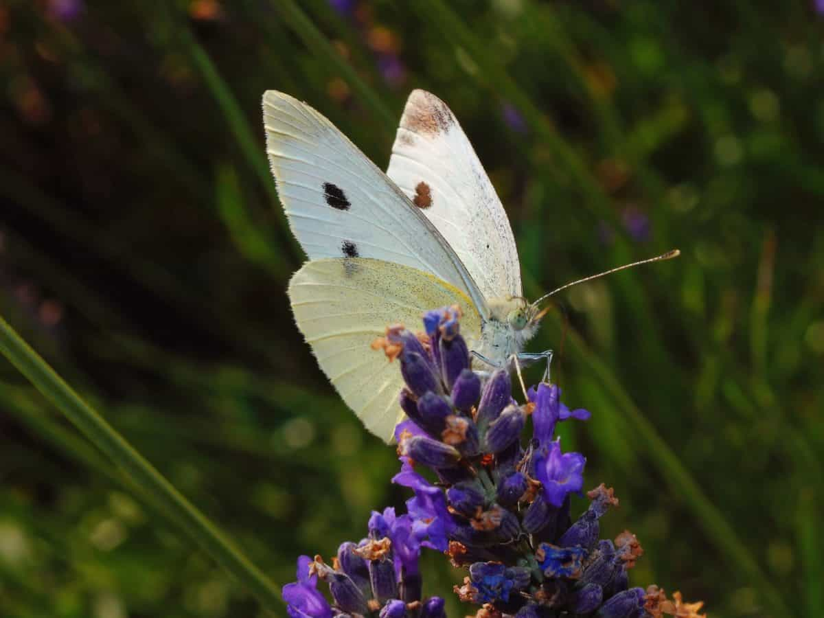 butterfly, flower, insect, nature, summer, plant, garden