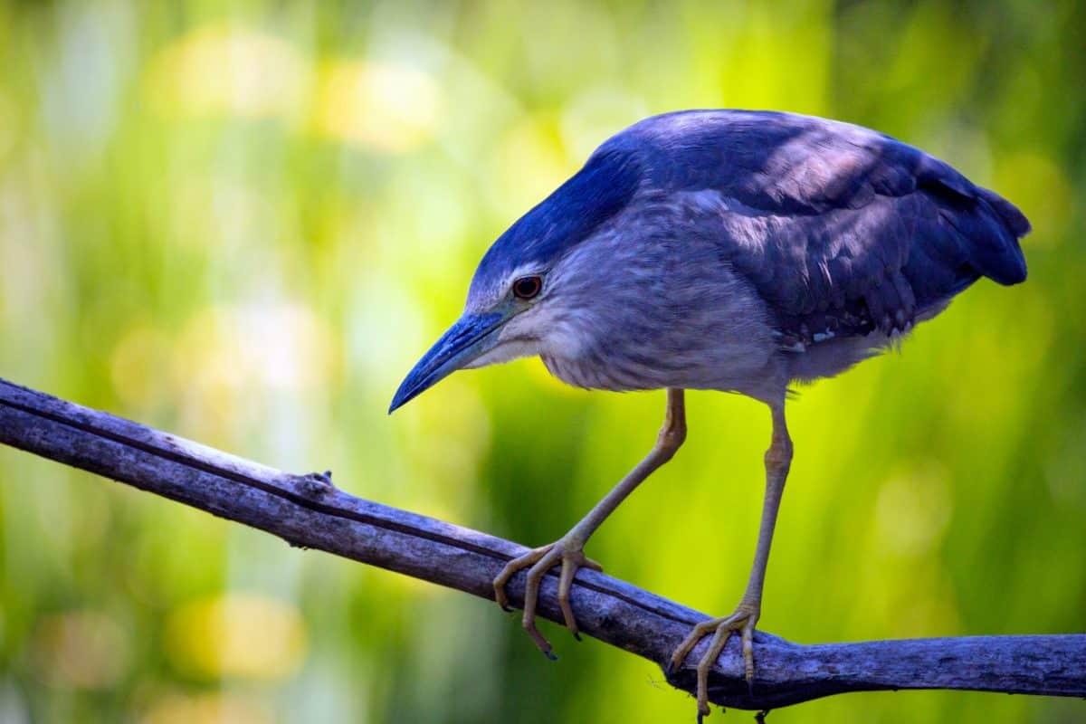 természet, madár, állat, ág, vadvilág, vadon élő, csőr, toll