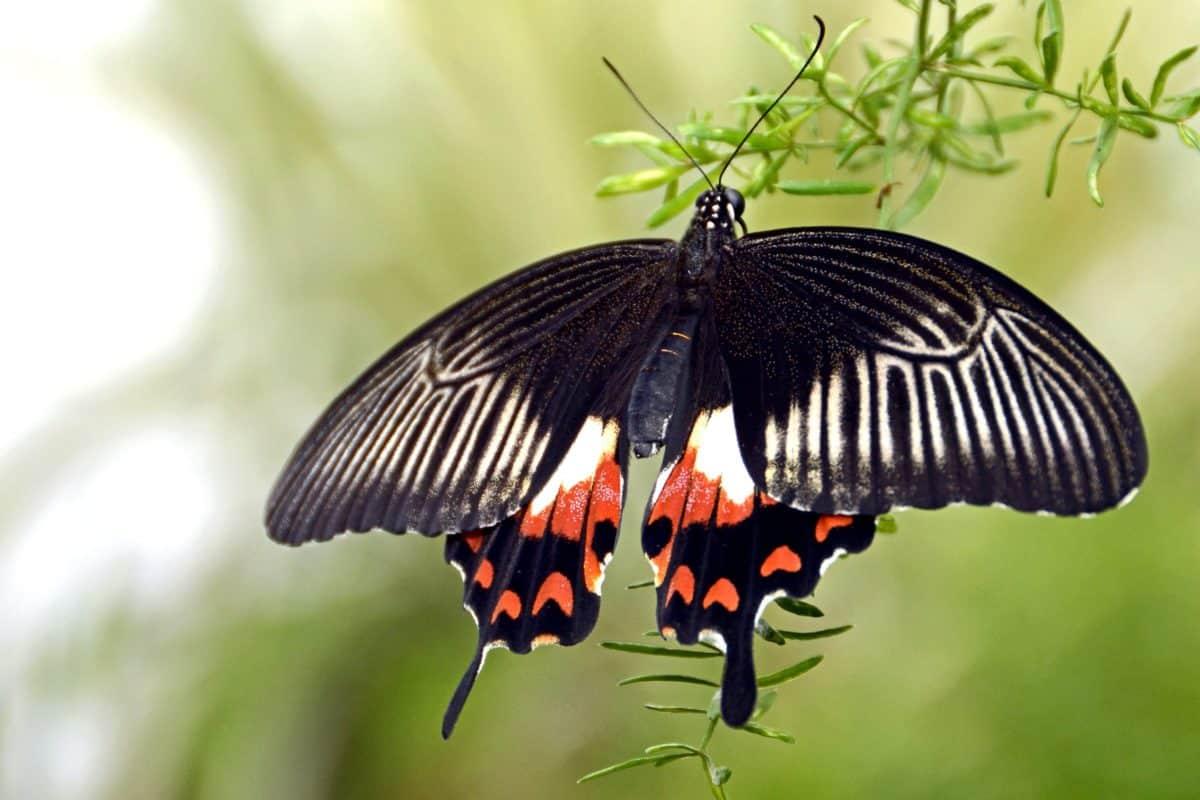 Wildtiere, Schmetterling, Insekt, Natur, Käfer, Gliederfüßer, Tier