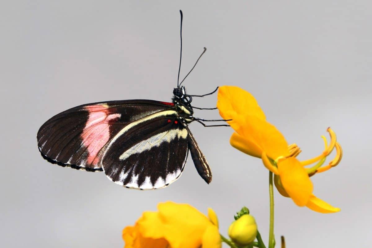 昆虫, 野生动物, 自然, 蝴蝶, 无脊椎动物, 植物