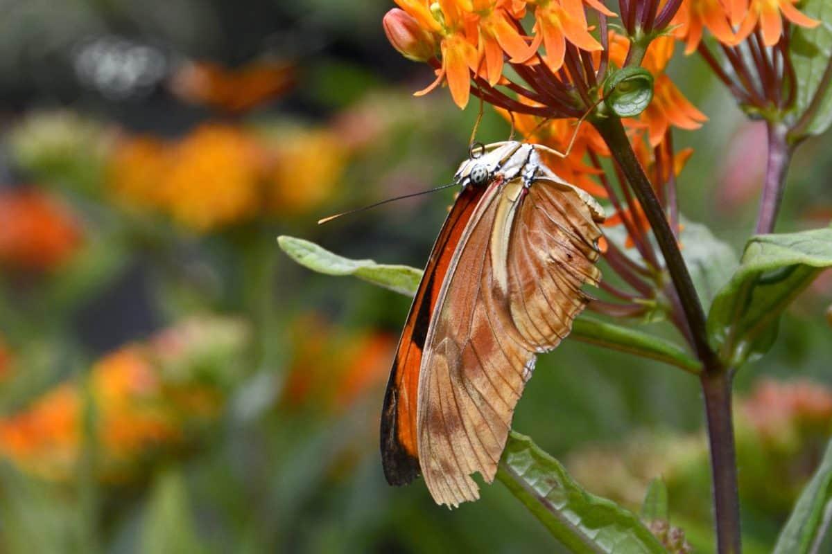 insekata, vrt, ljeto, priroda, list, cvijet, leptir, bilje