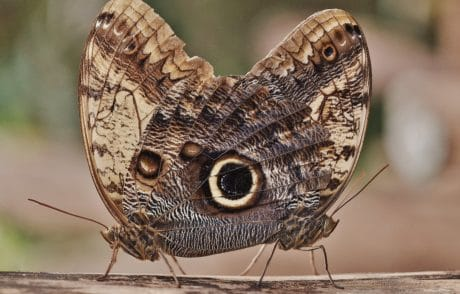 moth, nature, invertebrate, insect, animal, butterfly, wildlife