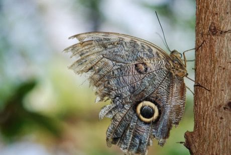 wild, nature, wildlife, insect, butterfly, moth, animal, arthropod
