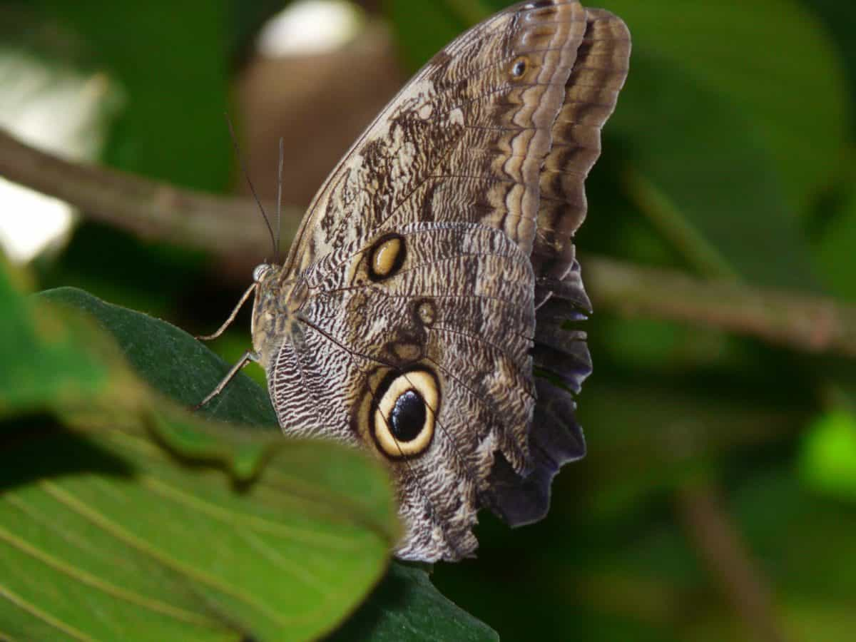 wildlife, animal, wings, invertebrate, nature, butterfly, insect