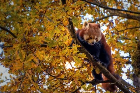 nature, leaf, wood, tree, autumn, wildlife, bear, outdoor, animal