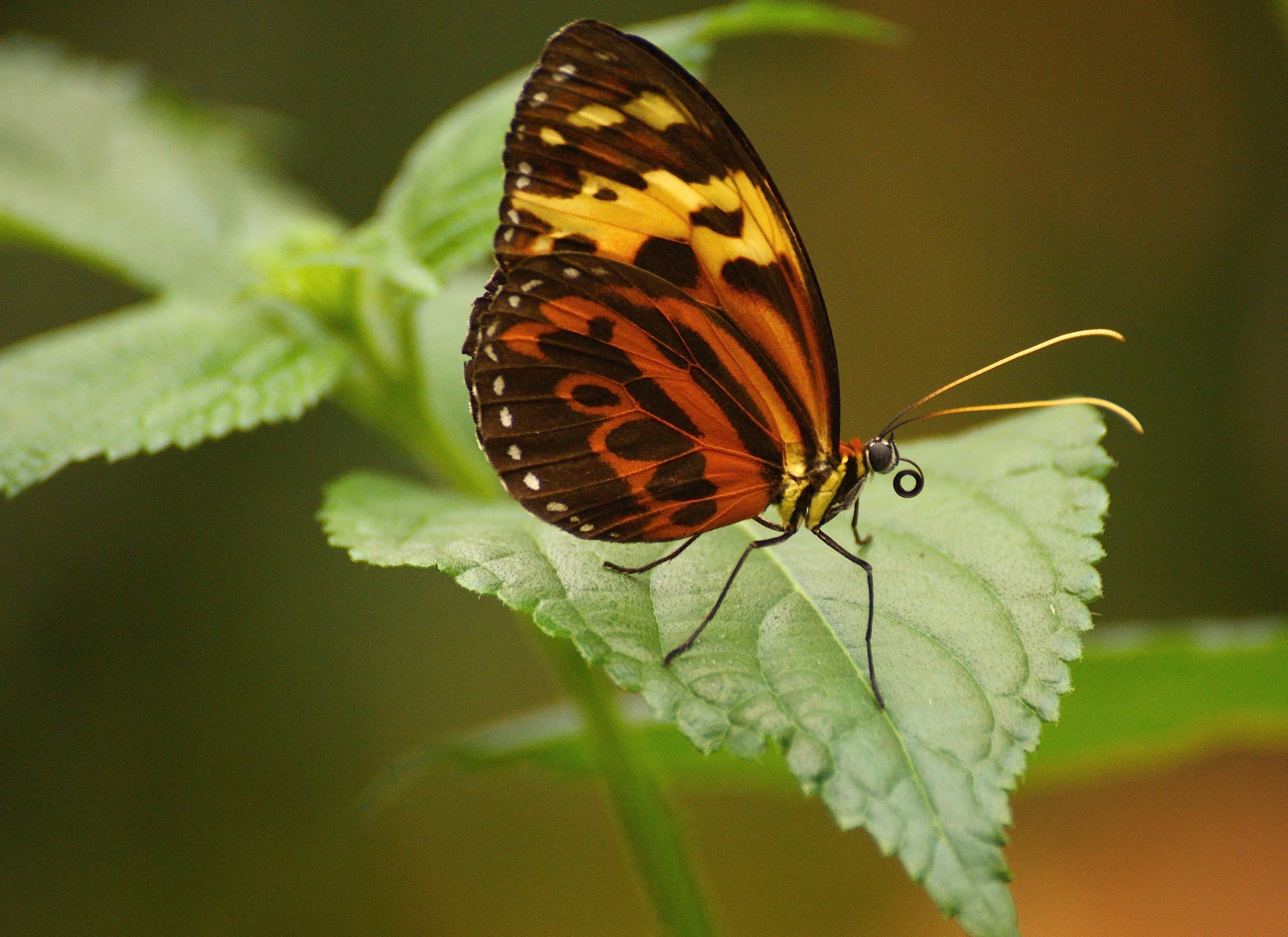 Free picture: insect, butterfly, wildlife, nature, plant ...