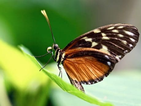nature, insect, invertebrate, summer, butterfly, wildlife