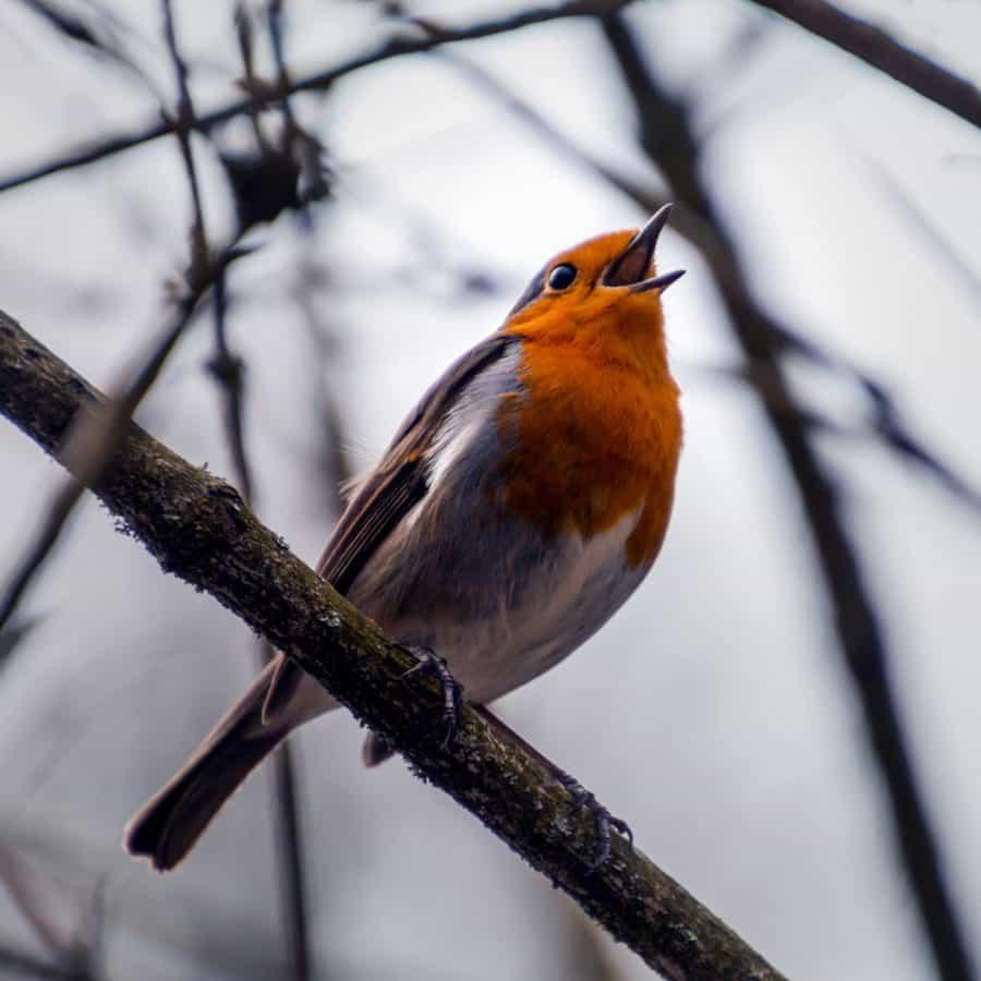 wildlife, bird, songbird, feather, beak, animal