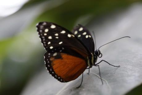 insectos, mariposa, naturaleza, invertebrados, fauna, flor