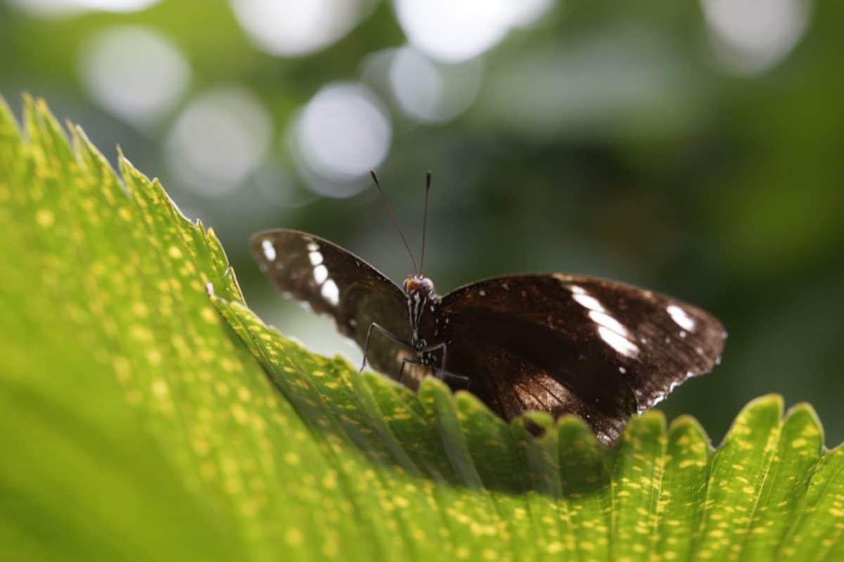 hmyz, volně žijící zvířata, motýl, léto, příroda, list, květ