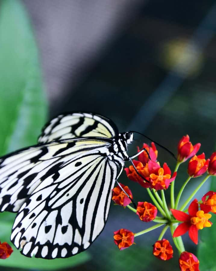 leaf, insect, wildlife, flower, nature, summer, butterfly