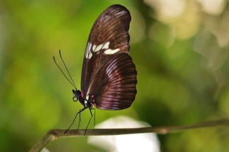 természet, rovar, kerti, színes, fekete, makró, pillangó, virág