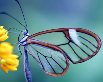 biologie, dieren in het wild, insect, macro, detail, vlinder, ongewervelden, natuur