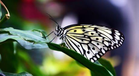 Natura, owad, ćma, lato, dzikość, piękny, Motyl