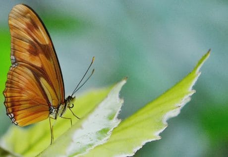 nature, animal, brown, butterfly, insect, leaf, biology, wildlife