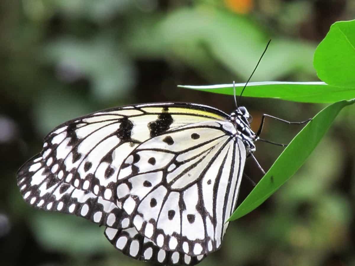 ongewervelden dieren in het wild, insect, zomer, natuur, vlinder