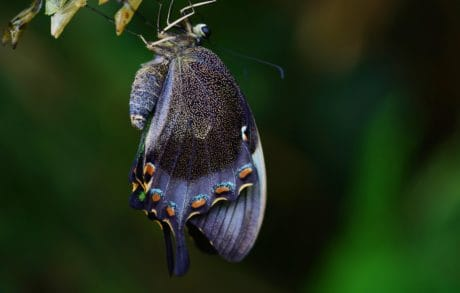 butterfly, nature, wildlife, insect, beetle, arthropod, animal