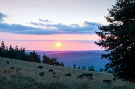 aube, ciel, arbre, paysage, colline, montagne, forêt, outdoor